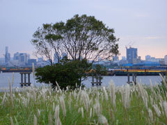 Tokyobay_tree